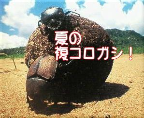 fukukoro.jpg